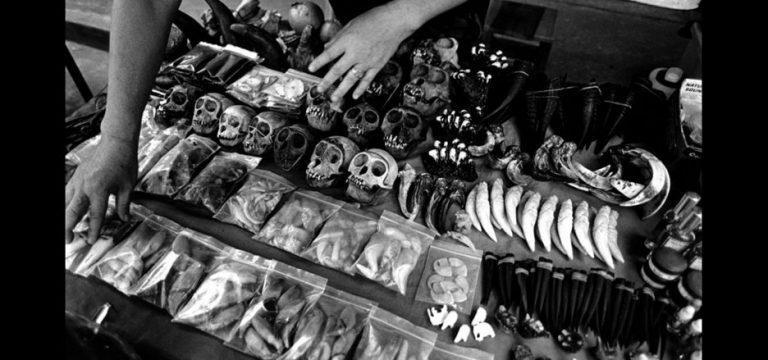 Perdagangan Hewan Ilegal, Cula Badak Dengan Harga Fantastis